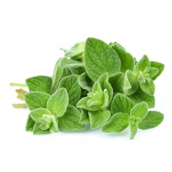 15.000 Seeds Wild - Greek Oregano (Origanum Vulgare) 15 - 3