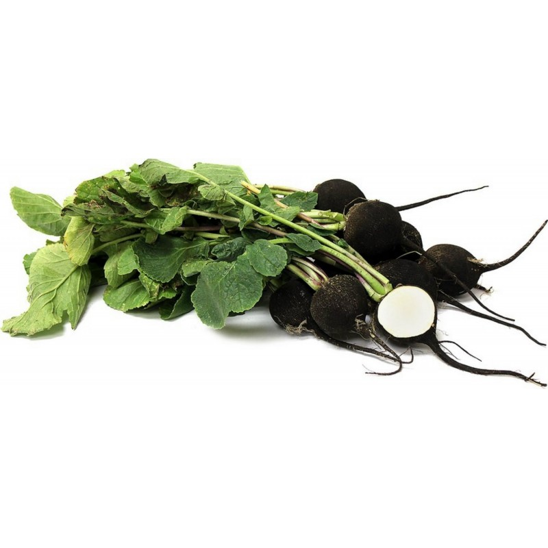 Radish Seeds - Black Spanish Round