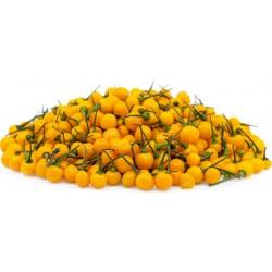 CHARAPITA Chili Samen - Das...