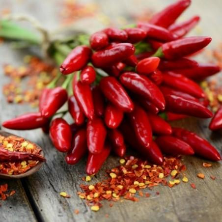 Italienska PEPERONCINI Chili Frön 1.55 - 3