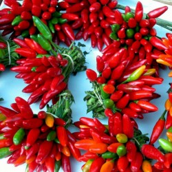 Italian PEPERONCINI Hot Chili Seeds 1.55 - 2