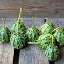 Etiquettes pour plantes jardin et marqueurs