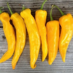 MARCONI Yellow Sweet Pepper Seeds 1.65 - 2