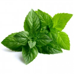 Peppermint Seeds (Mentha...