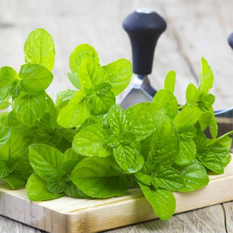 Spearmint - Green Mint Seeds (Mentha spicata) 1.95 - 1