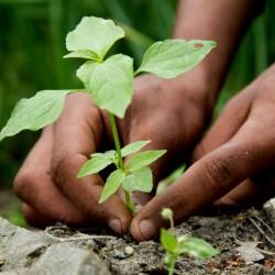 Seeds Gallery Profondeur Guide de plantation 0 - 2