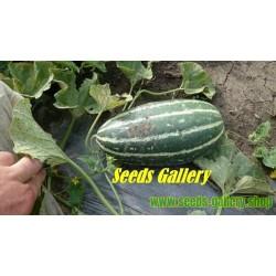 Sweet Thai Musk Melon Seeds