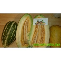 Melonensamen Sweet Thai Musk