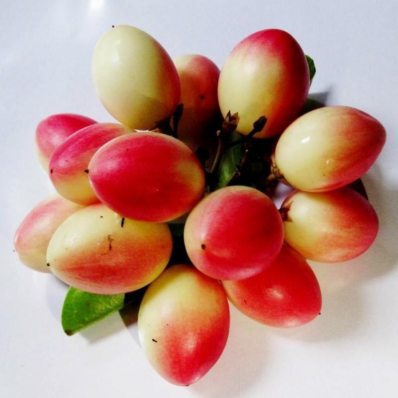 Karonda - Bengal Currant Seeds (Carissa carandas) 2.4 - 1