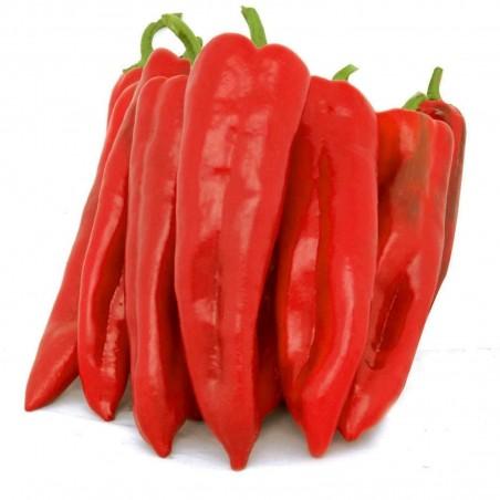 Sementes de pimenta doce Corno di Toro Rosso