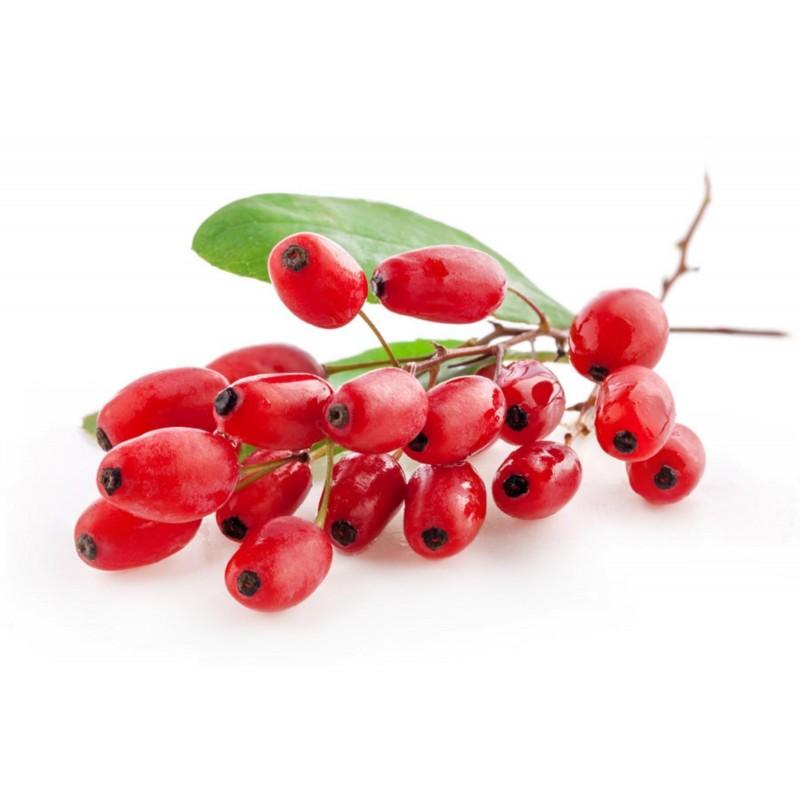 Berberis Frön medicinalväxt (Berberis vulgaris) 1.95 - 1