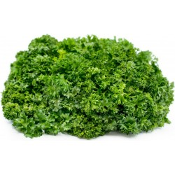 "Parsley Seeds ""Mooskrause"" 1.55 - 4"