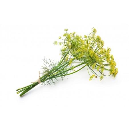 Herb Dill Bouquet Seeds 1.6 - 1