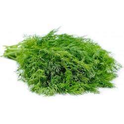 Sporoi Anēthos (Anethum graveolens) 1.6 - 4