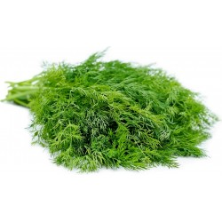 Herb Dill Bouquet Seeds 1.6 - 4