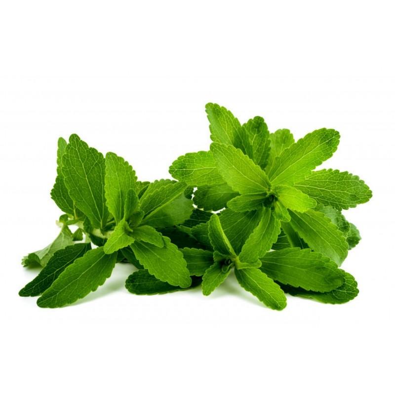 Stevia Samen Heilpflanze 1.9 - 2