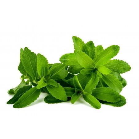 Stevia Seeds (Stevia rebaudiana)