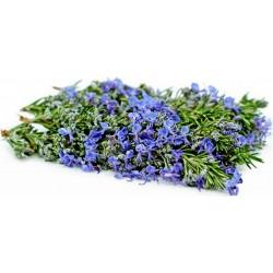 Semillas de Romero, reina de las plantas aromáticas 2.5 - 4