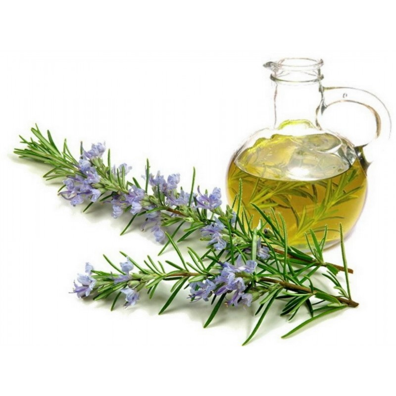 Rosemary Seeds (Rosmarinus officinalis) 2.5 - 5