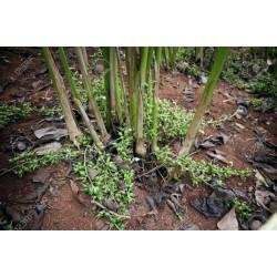 Green Cardamom Seeds 1.95 - 3