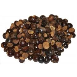 Semillas de Indio Papaya, Papayón Enanas - Miniatura