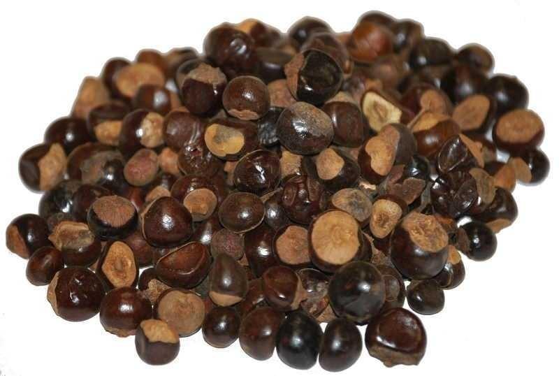 Semillas de indio papaya papay n enanas miniatura for Semillas de cactus chile