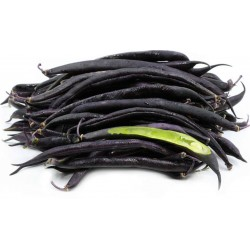 Dwarf French bean Purple Queen Seeds 1.95 - 2