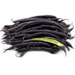 Semillas de frijol enano francés Purple Queen 1.95 - 2