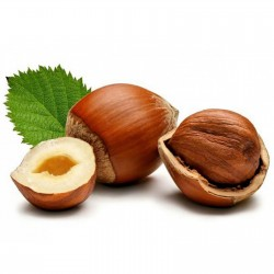 Hazelnut Seeds 1.8 - 4