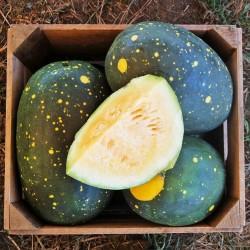 100 Samen Gelbe Wassermelone Mond und Sterne 10 - 7