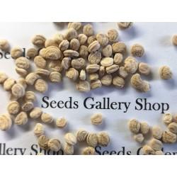 Serbian Plum Seeds (Prunus domestica)