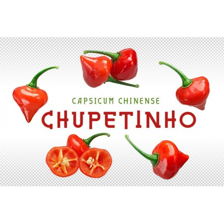 Biquinho - Chupetinho Red or Yellow Chili Seeds 2.05 - 7
