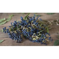 Sapphire-Berry Seeds (Symplocos paniculata) 1.95 - 3