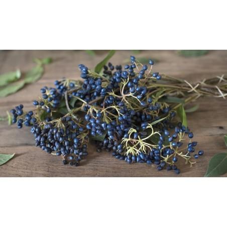 Seme Safirna Bobica (Simplocos paniculata) 1.95 - 3
