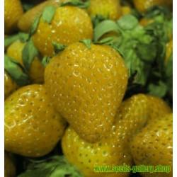 Strawberry Seeds Yellow Wonder