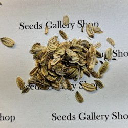 Ashitaba seeds (Tomorrow's Leaf) (Angelica keiskei) 3.95 - 2