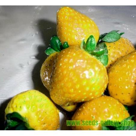 Φράουλα σπόροι Κίτρινο κατάπληξης Yellow Wonder