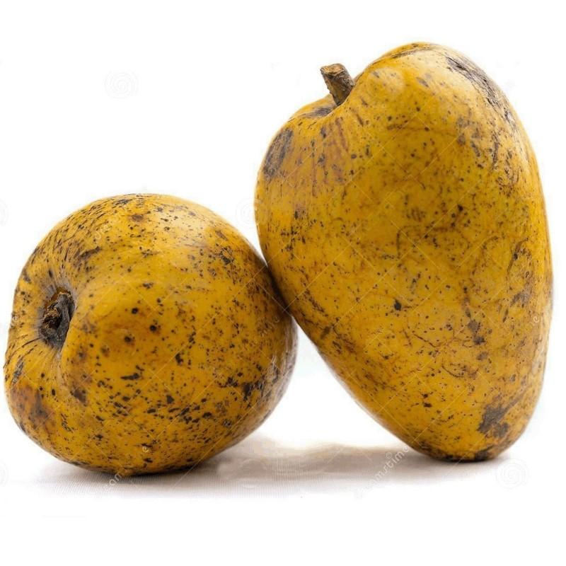 Pond Apple Seeds (Annona glabra) 1.85 - 5