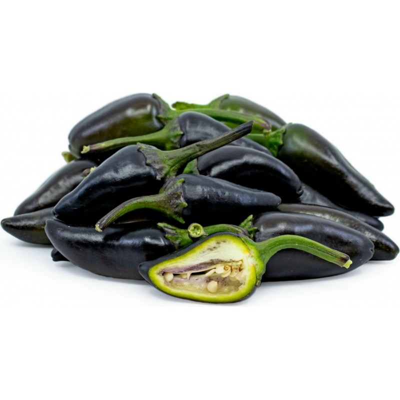 Chili Jalapeno Purple & Brown Seeds 1.75 - 1
