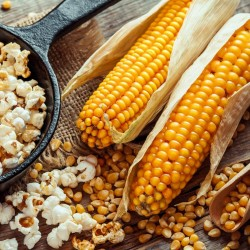 Popcorn 100 Samen - Züchten Sie Ihre eigenen 3 - 3