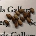 Maypop, Ljubicasta Pasiflora Seme (Passiflora incarnata)