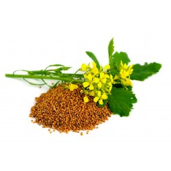 Chinese Mustard Seeds (Brassica juncea) 1.95 - 4