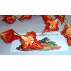 Semillas de Pimiento Habanero Kreole (C. chinense) 2 - 12