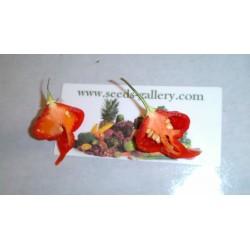 Σπόροι Τσίλι - πιπέρι Habanero Kreole (C. chinense) 2 - 13