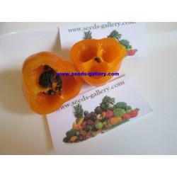 Cili Seme - Chili Inka - Rocoto Manzano 2.5 - 6