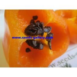 Σπόροι Rocoto Manzano Τσίλι 2.5 - 7