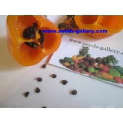 Semillas de Rocoto Manzano chile 2.5 - 8