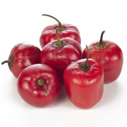 Semillas de Rocoto Manzano chile 2.5 - 2