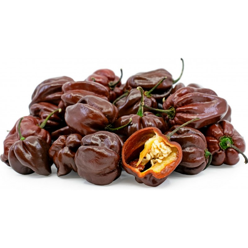 Habanero Chocolate Seeds 2 - 3