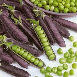Blauwschokker Pea Seeds 1.95 - 3